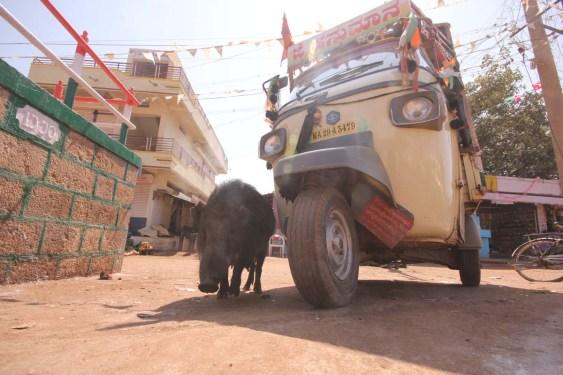India '14-51